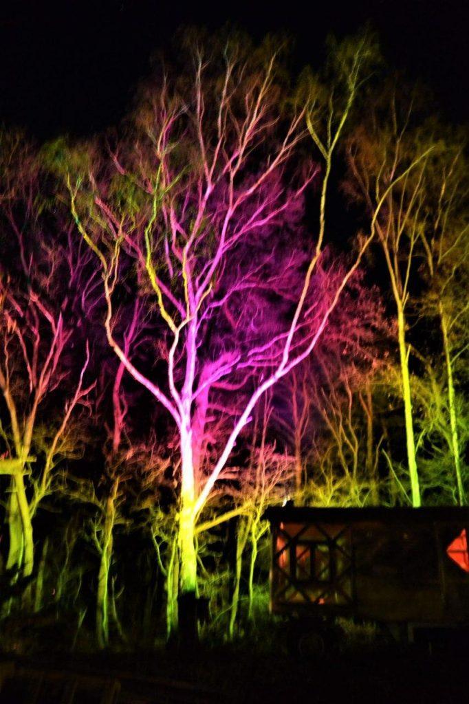 Baum und Beleuchtung