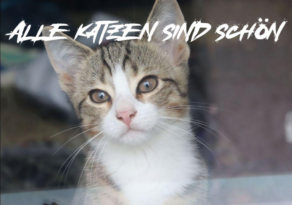 Soli-Katzen-Kalender